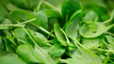Researchers discover decellularised spinach serves as edible platform for laboratory-grown meat