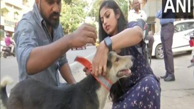 With fluorescent collars, this Hyderabad-based NGO is trying to save stray animals